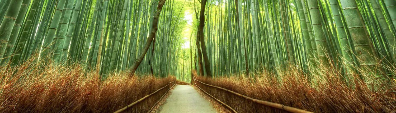 Giappone tour Arashiyama